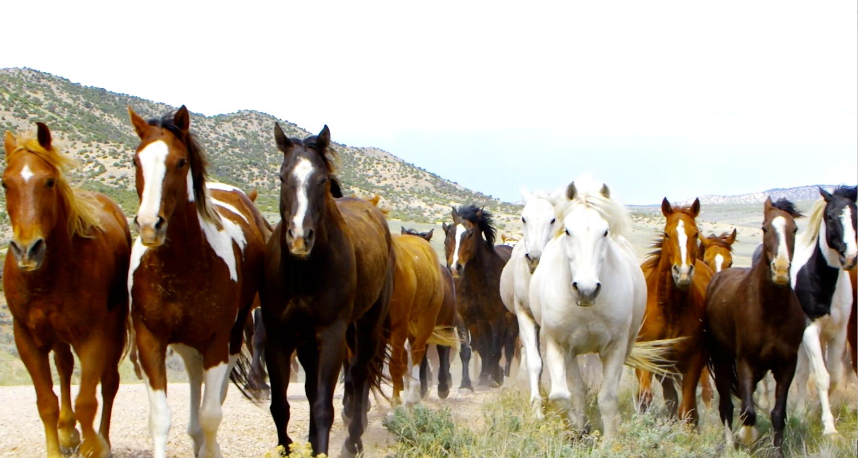 Sombreo Ranch Horse Drive